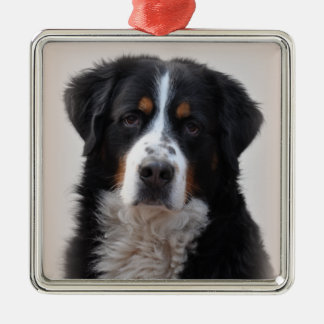 Bernese Mountain dog beautiful photo, gift Metal Ornament