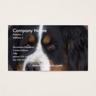 Bernese Mountain Dog Business Card