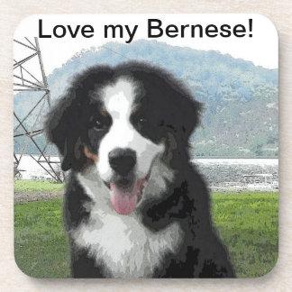 Bernese Mountain Dog Coasters