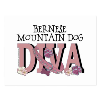 Bernese Mountain Dog DIVA Postcard