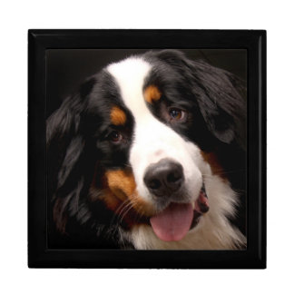 Bernese Mountain Dog Gift Box