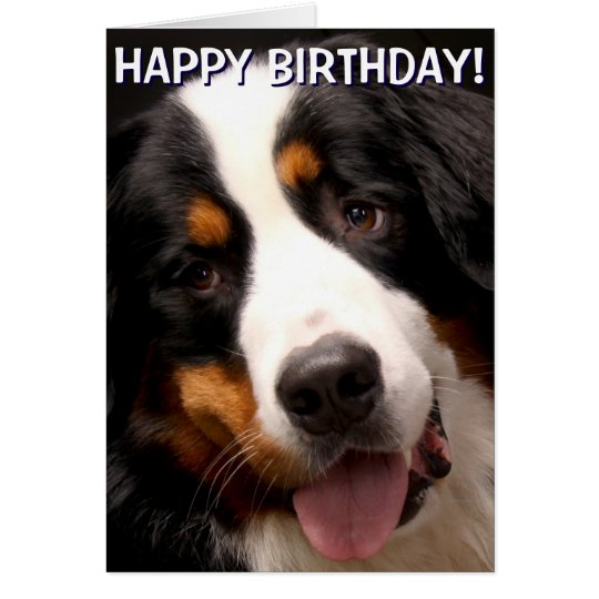 Bernese Mountain Dog greetings card