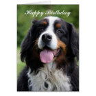 Bernese Mountain dog happy birthday greeting card