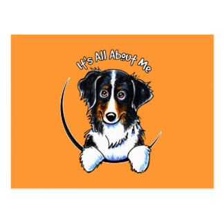 Bernese Mountain Dog IAAM Postcard