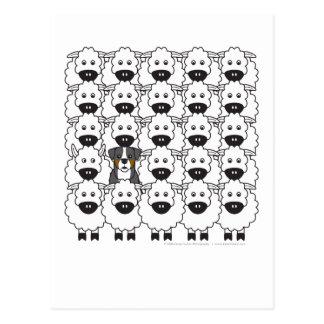 Bernese Mountain Dog in the Sheep Postcard
