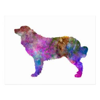 Bernese mountain dog in watercolor 2 postcard