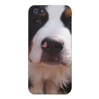 Bernese Mountain Dog iPhone Case iPhone 5 Cover