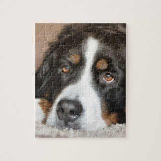 bernese mountain dog laying jigsaw puzzle