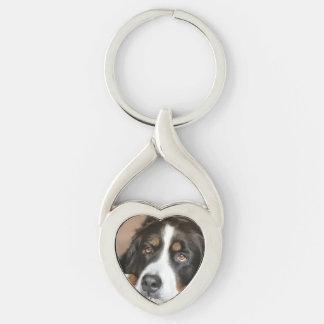 bernese mountain dog laying key ring