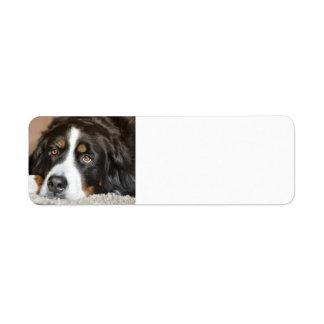 bernese mountain dog laying return address label