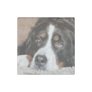 bernese mountain dog laying stone magnet