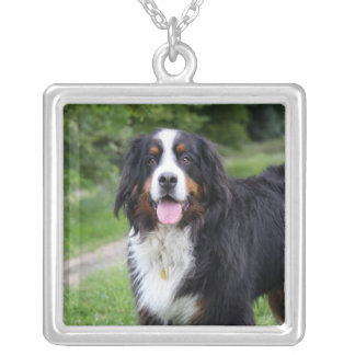 Bernese Mountain dog necklace,  gift idea Silver Plated Necklace