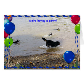 Bernese Mountain Dog Party Card