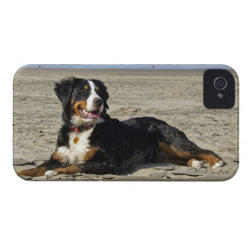 Bernese Mountain dog photo blackberry bold case