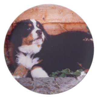 bernese mountain dog puppy plate