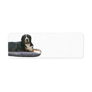 bernese mountain dog rust full laying return address label