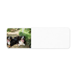 bernese mountain dog rust group return address label