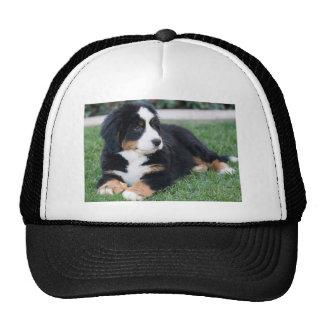 Bernese Mountain Puppy Cap