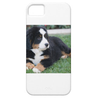 Bernese Mountain Puppy Case For The iPhone 5