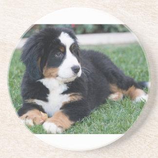 Bernese Mountain Puppy Coaster