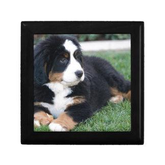 Bernese Mountain Puppy Gift Box