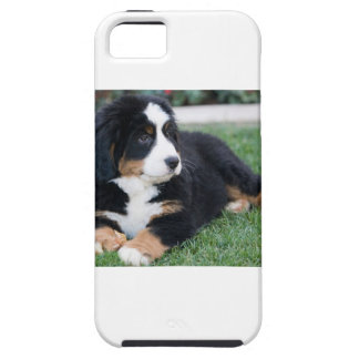 Bernese Mountain Puppy iPhone 5 Covers