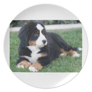 Bernese Mountain Puppy Plate