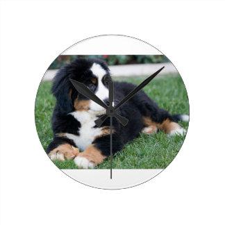 Bernese Mountain Puppy Round Clock