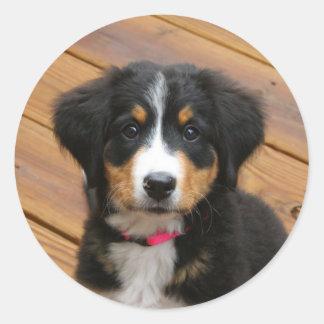 Bernese Mountain Puppy Stickers