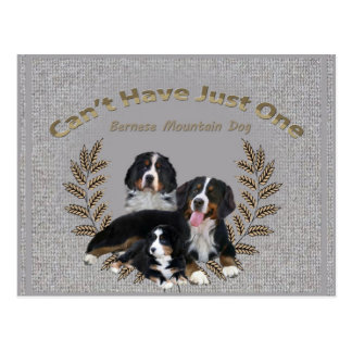 Bernese Mt. Dog Can't Have Just One Postcard
