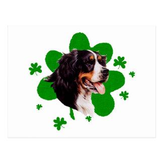 Bernese Mt. Dog St. Patrick's Day Postcard