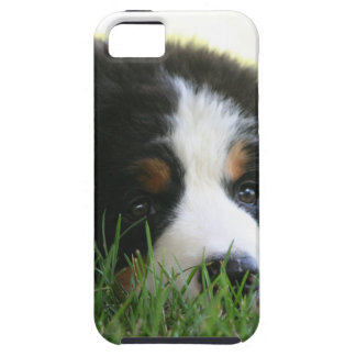 Bernese Puppy Case For The iPhone 5