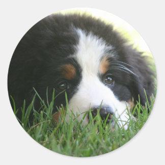 Bernese Puppy Classic Round Sticker