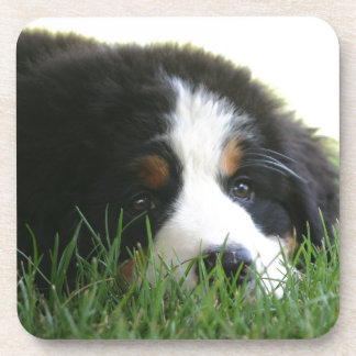 Bernese Puppy Coaster