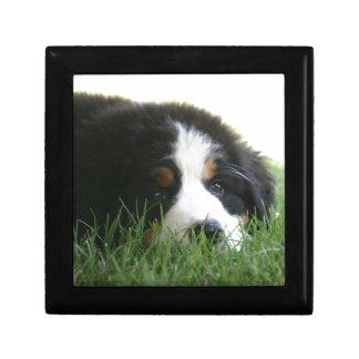 Bernese Puppy Gift Box