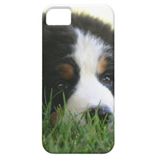 Bernese Puppy iPhone 5 Cover