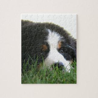 Bernese Puppy Jigsaw Puzzle