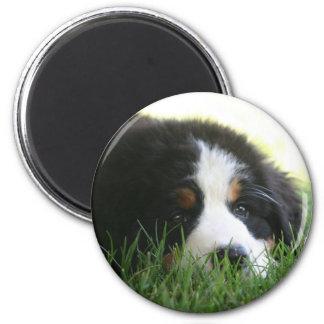 Bernese Puppy Magnet