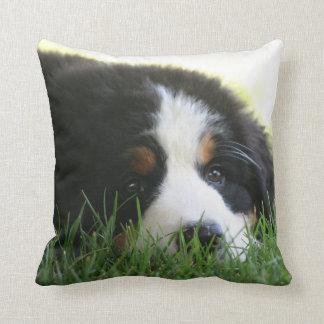Bernese Puppy Pillow