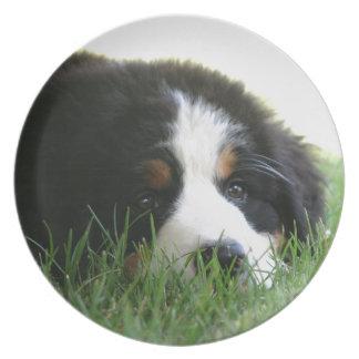 Bernese Puppy Plate