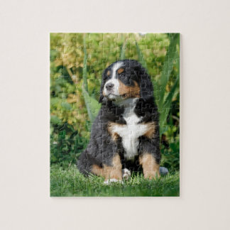 Bernese puppy puzzle