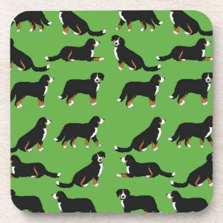 Bernese Sennenhund selection Coaster