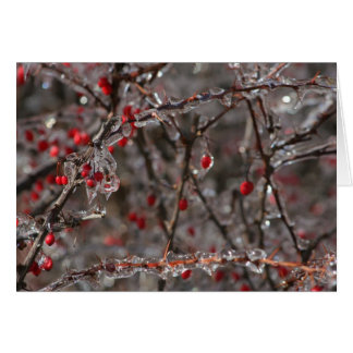Berries and Ice Greeting Card