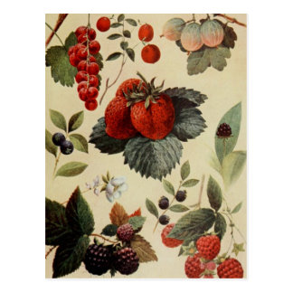 BERRIES BERRIES postcard