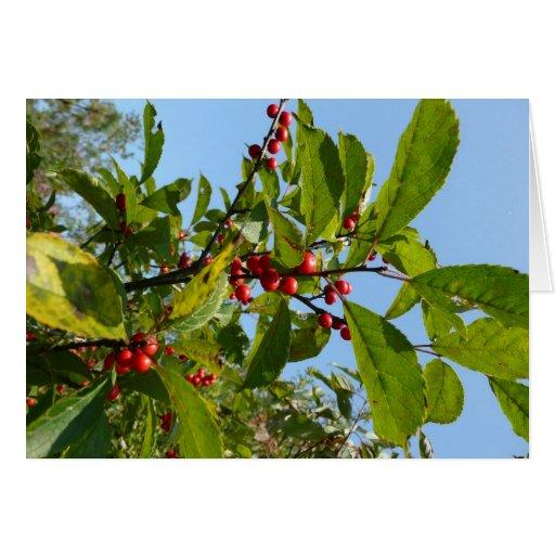 Berries Cards