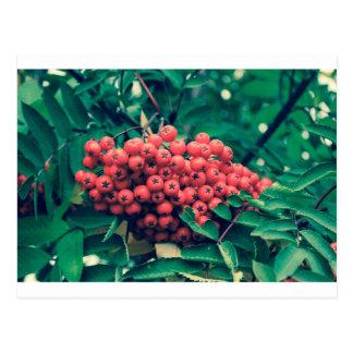Berries crossprocesberries postcard