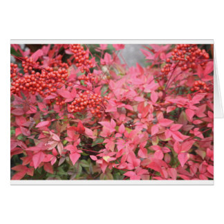 BERRIES FOR CHRISTMAS CARD