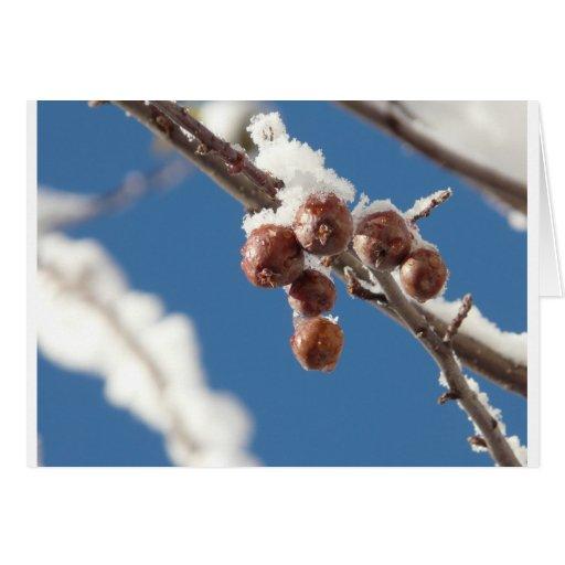 berries in snow cards
