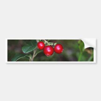 Berries of a wild lingonberry (Vaccinium vitis-ide Bumper Sticker