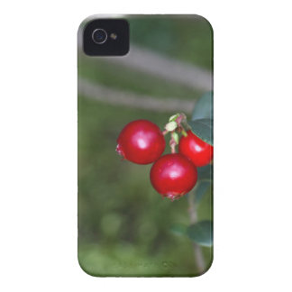 Berries of a wild lingonberry (Vaccinium vitis-ide iPhone 4 Cases